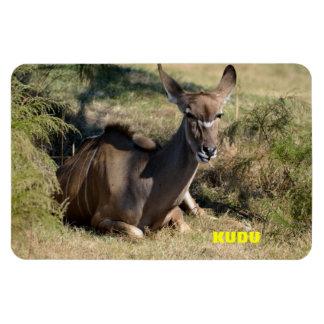 Female Kudu Rectangular Photo Magnet
