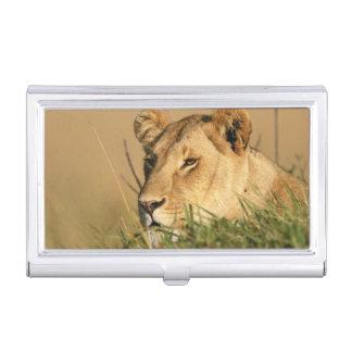 Female Lion Business Card Holder