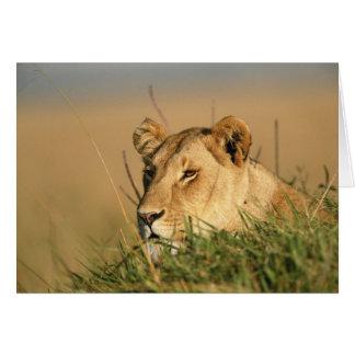 Female Lion Card