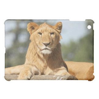 Female Lion Case For The iPad Mini