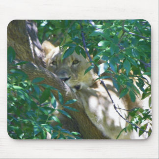female lion in tree mouse pad