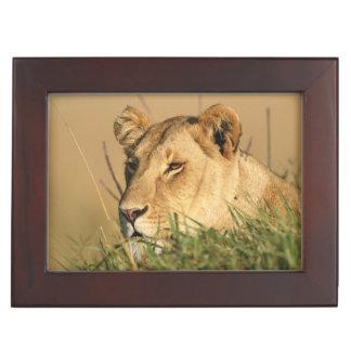 Female Lion Keepsake Box