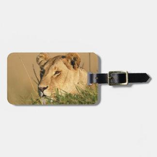 Female Lion Luggage Tag