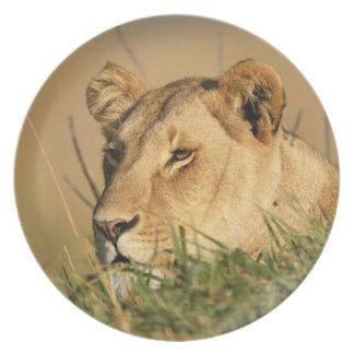 Female Lion Plate