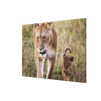 Female Lion with cub (Panthera Leo) as seen in Canvas Print