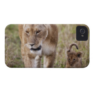 Female Lion with cub (Panthera Leo) as seen in iPhone 4 Case
