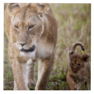 Female Lion with cub (Panthera Leo) as seen in Tile