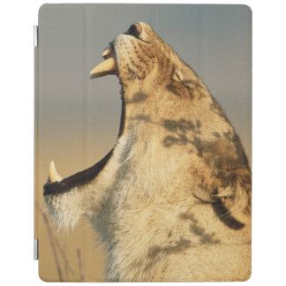 Female Lion yawning iPad Cover