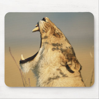 Female Lion yawning Mouse Mat