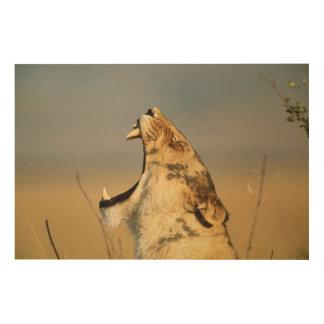Female Lion yawning Wood Wall Decor