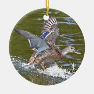 Female Mallard Coming In For Landing Christmas Ornament