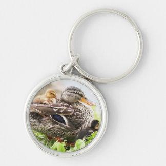 Female Mallard Surrounded By Ducklings Key Ring