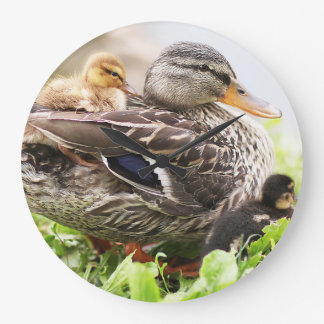 Female Mallard Surrounded By Ducklings Large Clock