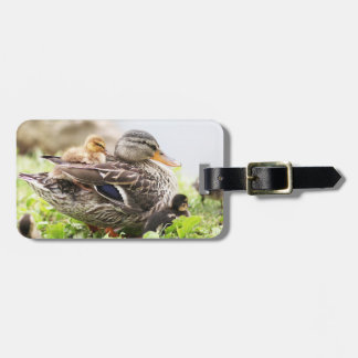 Female Mallard Surrounded By Ducklings Luggage Tag