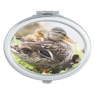 Female Mallard Surrounded By Ducklings Mirror For Makeup