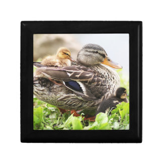 Female Mallard Surrounded By Ducklings Small Square Gift Box