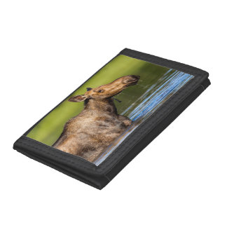 Female Moose Feeding In Small Lake Trifold Wallets