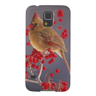 Female Northern Cardinal among hawthorn Galaxy S5 Case