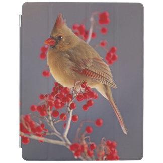 Female Northern Cardinal among hawthorn iPad Cover