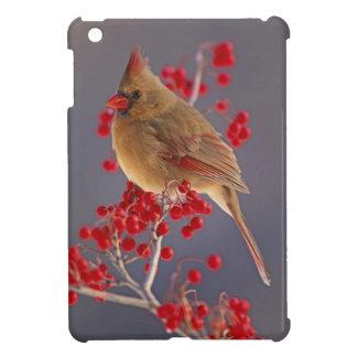Female Northern Cardinal among hawthorn iPad Mini Cases