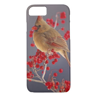 Female Northern Cardinal among hawthorn iPhone 7 Case
