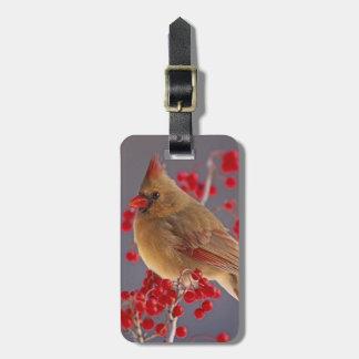 Female Northern Cardinal among hawthorn Luggage Tag
