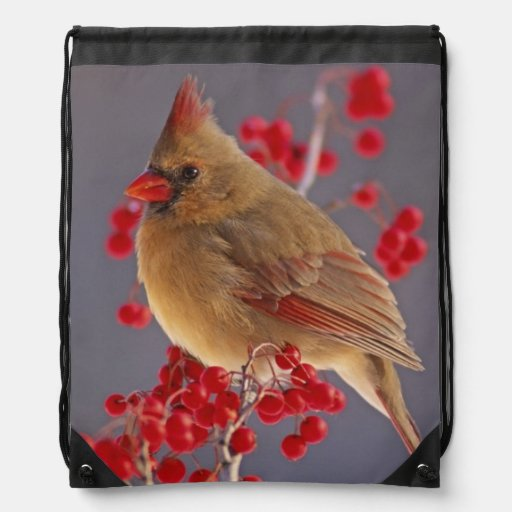 Female Northern Cardinal among hawthorn Cinch Bags