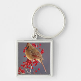 Female Northern Cardinal among hawthorn Silver-Colored Square Key Ring