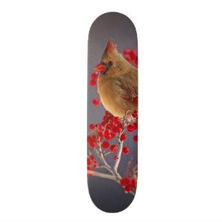 Female Northern Cardinal among hawthorn Skate Decks