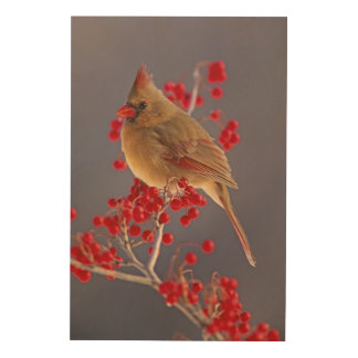 Female Northern Cardinal among hawthorn Wood Print