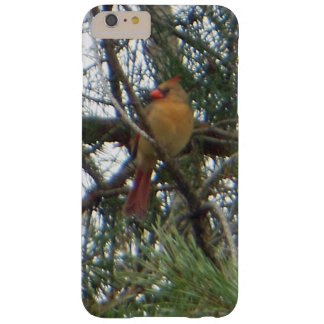 Female Northern Cardinal Austrian Pine Barely There iPhone 6 Plus Case