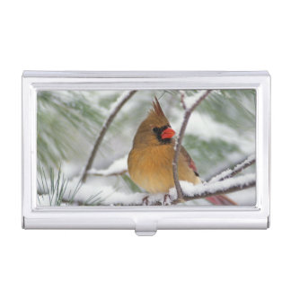 Female Northern Cardinal in snowy pine tree, Business Card Holder
