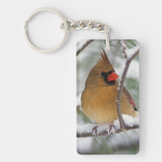 Female Northern Cardinal in snowy pine tree, Double-Sided Rectangular Acrylic Key Ring