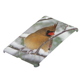 Female Northern Cardinal in snowy pine tree, iPad Mini Cases