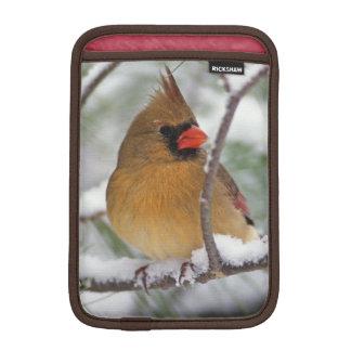 Female Northern Cardinal in snowy pine tree, iPad Mini Sleeve