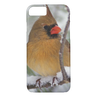 Female Northern Cardinal in snowy pine tree, iPhone 8/7 Case