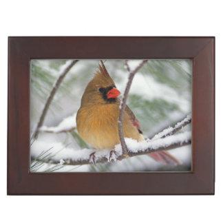 Female Northern Cardinal in snowy pine tree, Keepsake Box