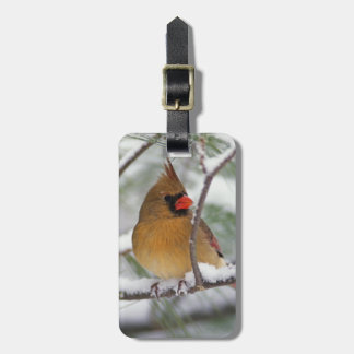 Female Northern Cardinal in snowy pine tree, Luggage Tag