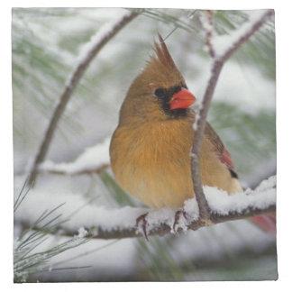 Female Northern Cardinal in snowy pine tree, Napkin
