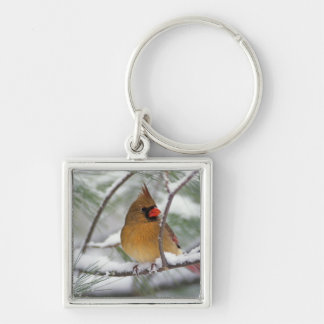 Female Northern Cardinal in snowy pine tree, Silver-Colored Square Key Ring