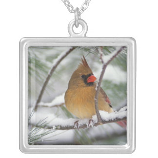 Female Northern Cardinal in snowy pine tree, Silver Plated Necklace