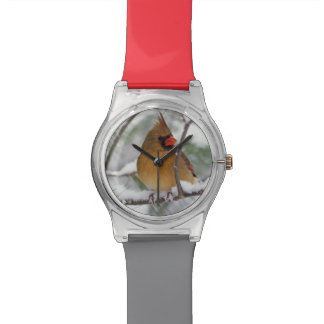 Female Northern Cardinal in snowy pine tree, Wristwatch