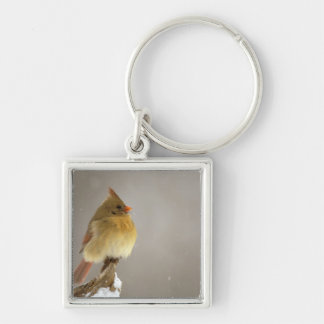 Female northern Cardinal on snow covered Silver-Colored Square Key Ring