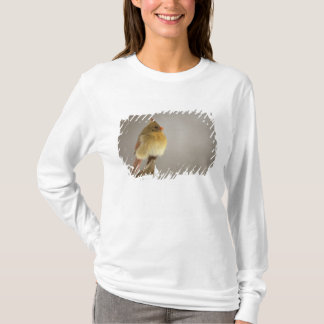 Female northern Cardinal on snow covered T-Shirt