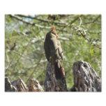 Female Northern Cardinal Photo Print