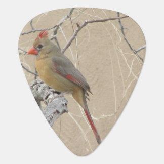 Female Northern Cardinal Plectrum