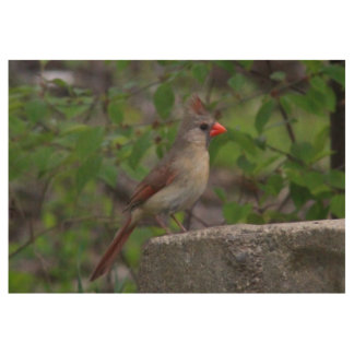 Female Northern Cardinal Wood Poster