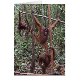 Female Orangutans in the Jungle of Borneo Card