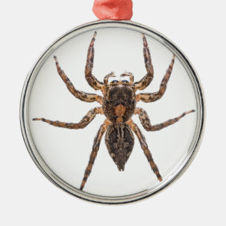 Female Pantropical Jumping Spider Christmas Ornament