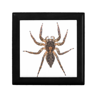 Female Pantropical Jumping Spider Gift Box